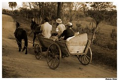 De carona... (Mrcia_) Tags: paran brasil cachorro cavalos carroa spia abigfave duetos cmeradeourobrasil jaguariava mrciaelia mrciamitsi explore031207265