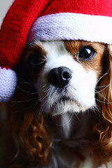 Merry Christmas (Marina Loram) Tags: christmas dog puppy cavalier cavalierkingcharlesspaniel christmashat