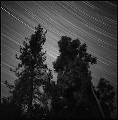 Star trails in Redding (joeclaus) Tags: trees stars hasselblad redding startrails