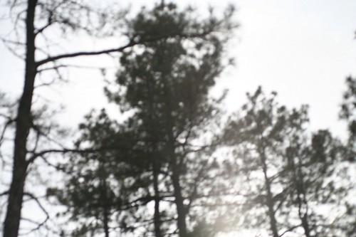 Tree-o II