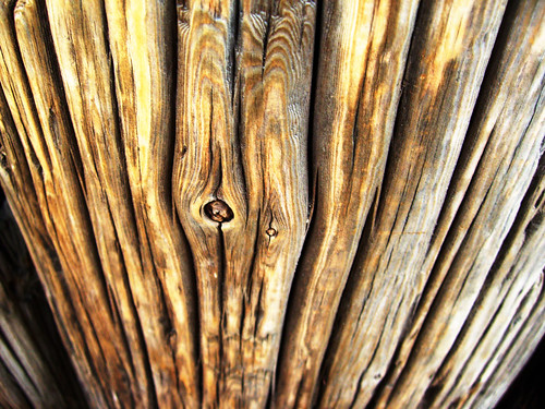 wood stump closeup