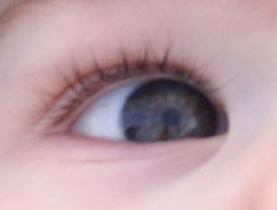 PICT0092 cropped eye