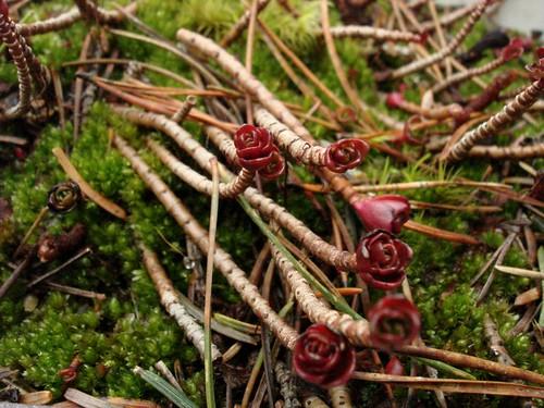 branchies