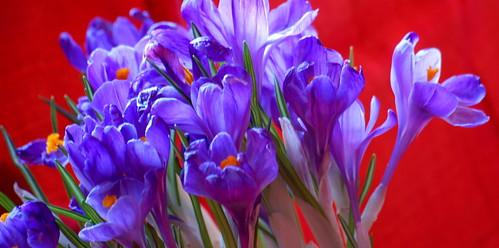 Si bien la flor perezca y ése sea su esplendor...