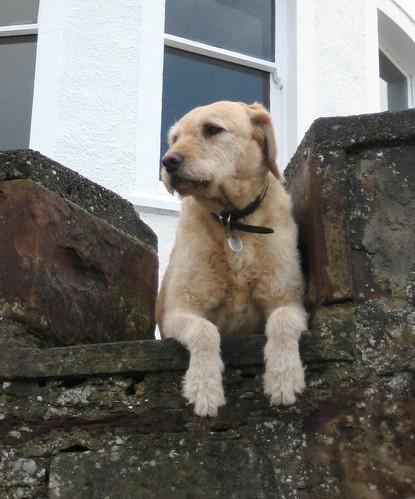 Dog in pose Fairlie Miller Walk