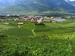 Vigne (candido33) Tags: italy verde italia village vigne smalltown vino sdtirol altoadige adige neumarkt weinstrasse borghi vigneti stradadelvino egna tralci paesaggidelvino photobyaureliocandido