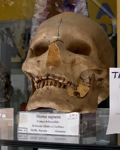 Homo Sapiens for Sale