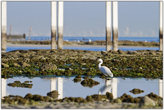 My Home (U_SF) Tags: sea reflection beach water rock usf yousef naturesfinest mywinners abigfave alhaqqan diamondclassphotographer flickrdiamond paird usfcom holyfintas