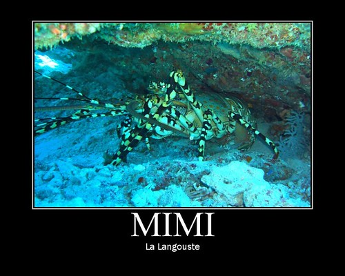 Mimi la langouste
