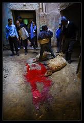 Aid el Kabir, Morocco (www.igorbilicphotography.com) Tags: animals sheep killing muslim islam morocco sacrifice cruel