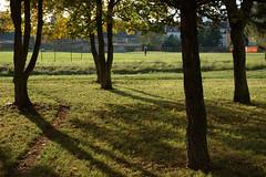 DSC_0024 (jakub_hla) Tags: trees light shadow sun tree green grass leaves yellow leaf afternoon shine lawn flare trunk ostrov brach sunllight afsdx1870mmf3545g