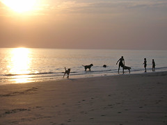 North Sea Sunset (Axxolotl) Tags: light sunset sea holland beach dogs nature water netherlands silhouette strand golden licht meer wasser sonnenuntergang sundown natur silhouettes zeeland northsea nordsee hunde myfave niederlande dishoek liquidgold abigfave flssigesgold