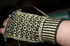 2216856789 bee58012e2 m Mittens for Beginners