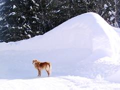 Chanelle sur banc de neige