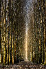 Manmade forest (Danil) Tags: wood winter light tree dutch leaves forest landscape nikon daniel nederland boom groningen bos hdr nep harkstede photomatix