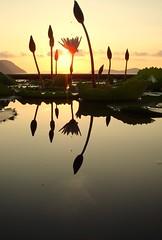 Sunrise in Phuket (djc75) Tags: pictures thailand photography photo topf50 topf75 searchthebest photos explore douglas reflexions cowley djc evason blueribbonwinner snapphotography flickrsbest bej mywinners abigfave platinumphoto anawesomeshot impressedbeauty superbmasterpiece diamondclassphotographer flickrdiamond ysplix amazingamateur theunforgettablepictures excapture naturessilhouettes betterthangood goldstaraward top20sunsetsofourhearts douglascowley dougcowley djc75 dcowley