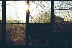 (yyellowbird) Tags: light sun house abandoned window glass vines glare porch springbrook