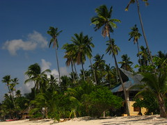 Beach Philippines Siquijor Island (hn.) Tags: trees copyright tree beach nature strand island coast sand asia asien heiconeumeyer seasia soasien southeastasia sdostasien philippines natur insel sanjuan palmtrees pi shore palmtree coastline coconuttree palme visayas pilipinas kste sandybeach philippinen sandbeach copyrighted palmen thephilippines siquijor cocogrove sandstrand visayan kokosnusspalme oceanshore coconutpalmtree tubod siquijorisland centralvisayas tp0708 siquijorprovince cocogroveresort