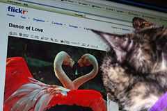 Dance of Hunger (Kjunstorm) Tags: cats pets animals felines kato supershot