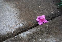 Lonely Petals