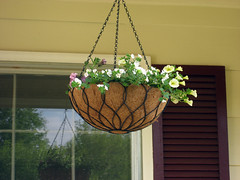 spring hanging baskets