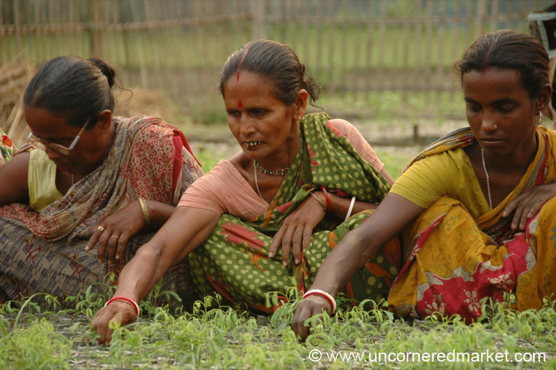 essay place of women in indian society 2018-10-13 the role of women in society has been greatly overseen in the last few decades but now are coming to a more perspective to people in the early days women were seen as wives who were intended to cook, clean, and take care of the kids.