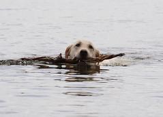 Kai' s First Swim