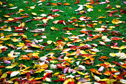 Pictures of Fall Leaves