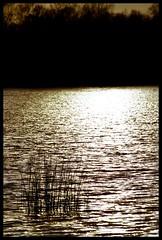CADRAGENegative0-08-08(1) (claudedelrieu21) Tags: amazing eau paysage natures damncool masterclass naturesfinest blueribbonwinner encarnado supershot amazingtalent amazingshot flickrsbest fantasticflower masterphotos platinumphoto anawesomeshot flickrbest ultimateshot naturefinest infinestyle ysplix ilovemypic masterphoto overtheexcellence naturemasterclass excellentsflowers natureselegantshots