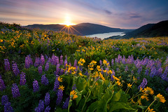 Rowena rising.. (Jesse Estes) Tags: jesse wildflowers estes rowena 1635ii 5d2