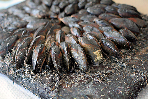 fire roasted mussels