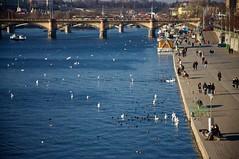 Birds & Vltava (Enhanced Reality) Tags: bridge blue winter people birds river evening march nikon europe prague tram sunny praha czechrepublic polarizer vltava 2011 d90