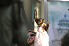Crystal the Monkey works the crowd (kjdrill) Tags: california justin usa mike zach movie ed paul losangeles 1212 tyson ken bradley hollywood cooper premiere blvd helms giamatti bartha jeong galifiankis hangoverpart2 monkeythailandfilmcomedyfunny