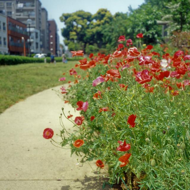 見慣れた景色の花々