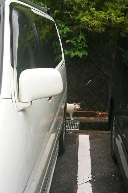 Today's Cat@2011-05-31