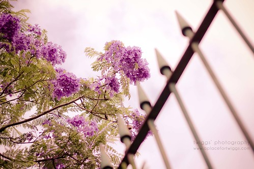 {happy fence friday :: the dreamy fence} by {Twiggs}... catching up very slowly!
