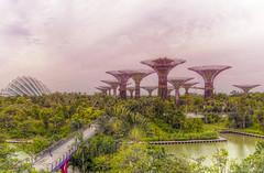 Avatar (Fil.ippo) Tags: wood morning plants tree gardens forest photoshop nikon singapore avatar sigma greenery botanic 1020 filippo giardini topaz gardensbythebay d5000 botanici filippobianchi
