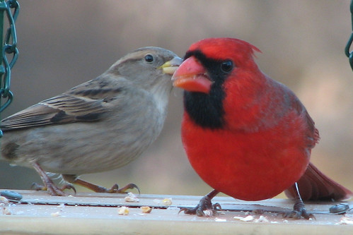"Michigan Winter Bird ""Friends""!"