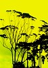 Mysterious faces within...! (~Haani~) Tags: trees sky green nature yellow faces mysterious aucklandzoo haani thatsclassy naturewatcher