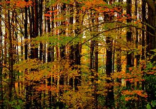 autumn wood by NH woodchuck