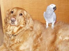 Trinity & bird