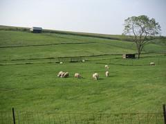 Green fall pasture