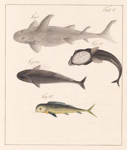 stylised sharks and fish