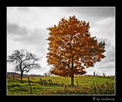 a grey day (claudia hering (sundance)) Tags: autumn trees landscape bravo framed soe themoulinrouge supershot magicdonkey amazingtalent pentaxk110d anawesomeshot impressedbeauty aplusphoto diamondclassphotographer thegoldenmermaid theperfectphotographer thegardenofzen grysky