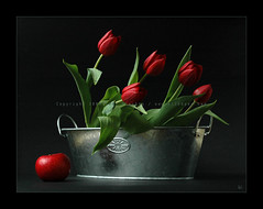Red Tulips and Red Apple (AlexEdg) Tags: november flowers autumn red stilllife apple 50mm tulips stilleben nikond70s 2007 redflowers naturemorte redtulips onblack 50mmf18 redapple themoulinrouge blueribbonwinner alexedg alledges superbmasterpiece