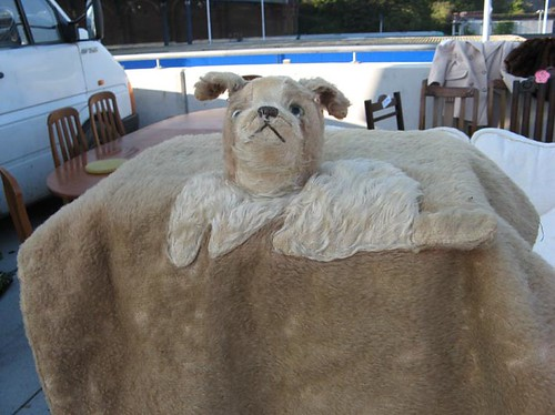 Dog head blanket