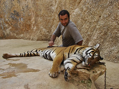 Touching the tiger