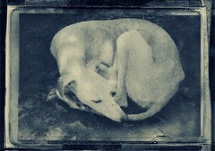 "nature morte_whippet 1 (vic bitter) Tags: blackandwhite texture monochrome animal portraits vintage paper polaroid still photographic papernegative taxidermy plastic goop perth damage aged analogue 667 negatives genre postmortem naturemorte alternativeprocess palabra alternativephotography artphotography polaroidlandcamera alternativeprocesses agedphotos historyofphotography life"" polaroidabuse ""nature ""animal 125i themuseum historicalprocesses polaroidedge instantcameras papernegatives portraits"" cameramodifications dyediffusiontransfer polaroidblackandwhite vintageprocesses historictechniques"