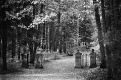 Pavlosk (arshavsky pasha) Tags: trees blackandwhite     counteryside