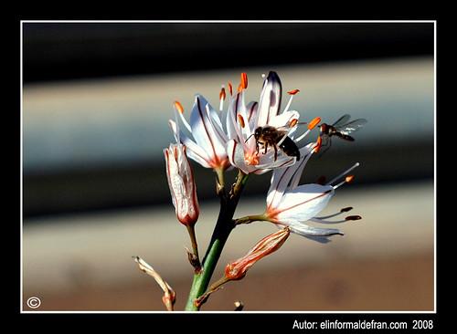 Flor avispa y mosca